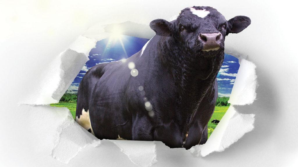 LIC Premier club bull