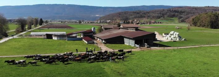swiss organic dairy farm